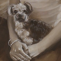 custom oil portrait of Yorkshire Terrier in lap