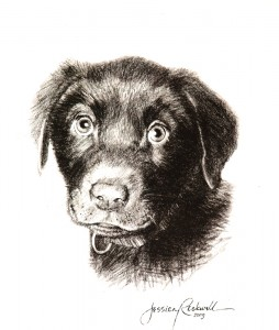Charcoal Drawings Dog Mocha